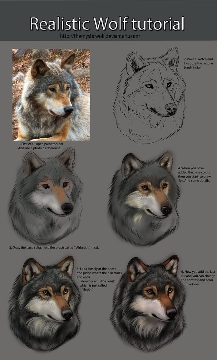 This Is Some Advice For You Guys Who Draw Wolves I Am Not An Expert On  It But People Have Asked About This The Only Thing You Can Do Is Train,