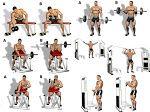 Bicep Workout Program to Guarantee the Biggest Biceps