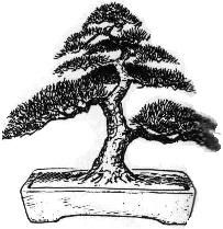 Informal upright Bonsai style  Moyogi  The informal upright style is common in both nature and in the art of Bonsai.