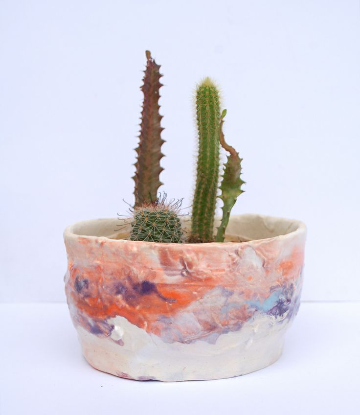 Growing cacti collection in handmade pot