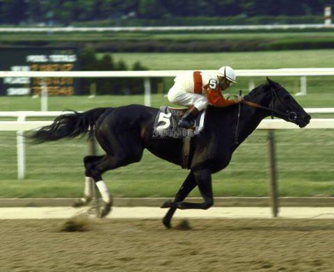 24 Best Horse Racing Images On Pinterest Running Horses
