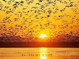 Imagini pentru tablouri cu apus de soare