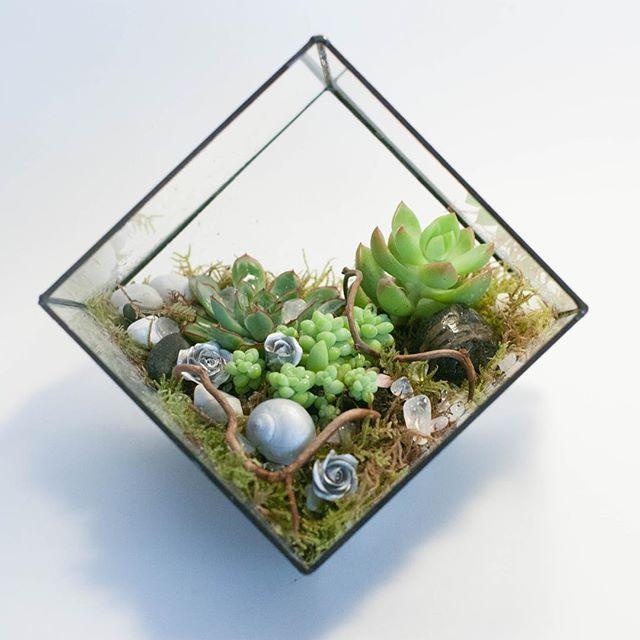 Очень красиво на стене смотрится вот такой подвесной флорариум👌🏻  Попробовали сделать - нравится)  #суккулент #succulents #кактус #cactus #куб#terrarium #florarium #террариум #террариумназаказ #флорариум #флориумназаказ #мох#moss#подвеснойфлорариум #флорариумнастену#glassbox #succulenthouse