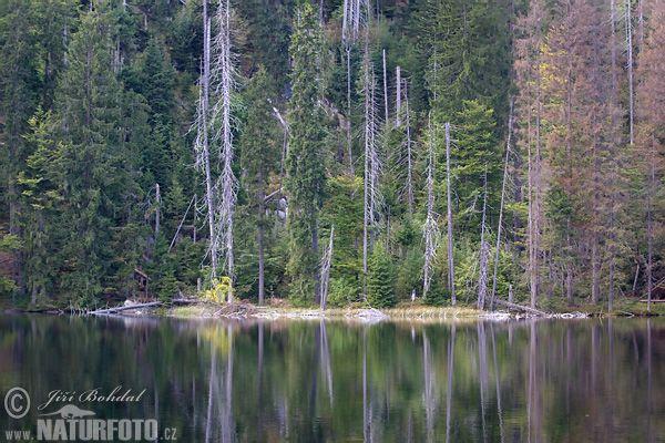 Prášilské jezero (Sum)