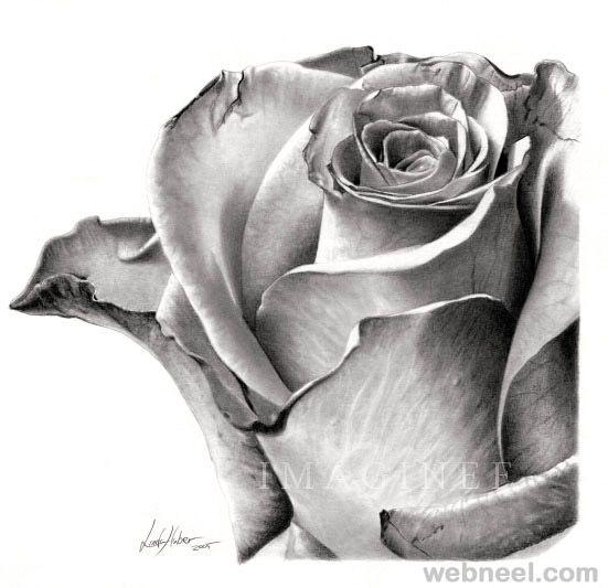 35 Beautiful Flower Drawings and Realistic Color Pencil Drawings | Read full article: http://webneel.com/flower-drawings | more http://webneel.com/daily | Follow us www.pinterest.com/webneel