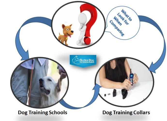 What To Look For When Comparing Dog Training Schools Dog Training