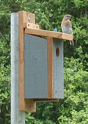 Not a pallet but he loves making bird houses & feeders . . . How to Build a Bluebird House