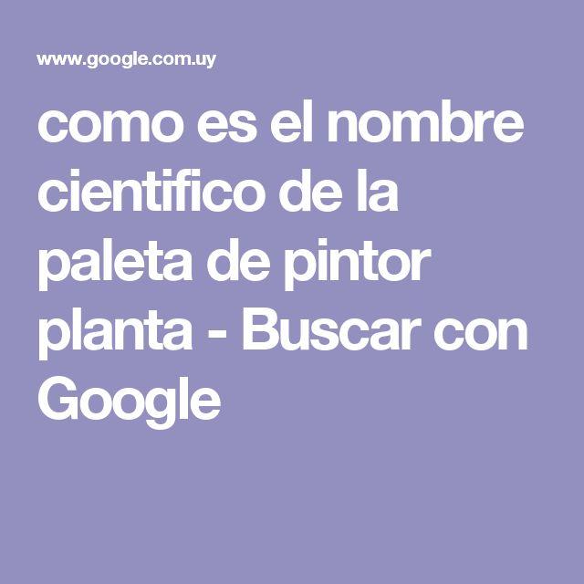 como es el nombre cientifico de la paleta de pintor planta - Buscar con Google