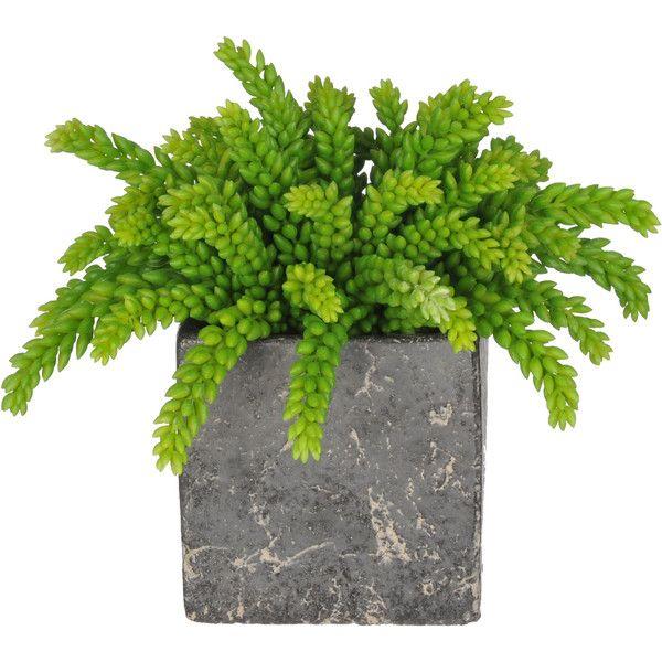 Best 25 artificial indoor plants ideas on pinterest for Indoor green plants images