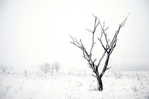 Akos Major// I miss winter: Silent Photos, Winter Trees, Art Photography, Inspirational Art Pictures, Photo Inspiration, Photography Pics, Art Photos