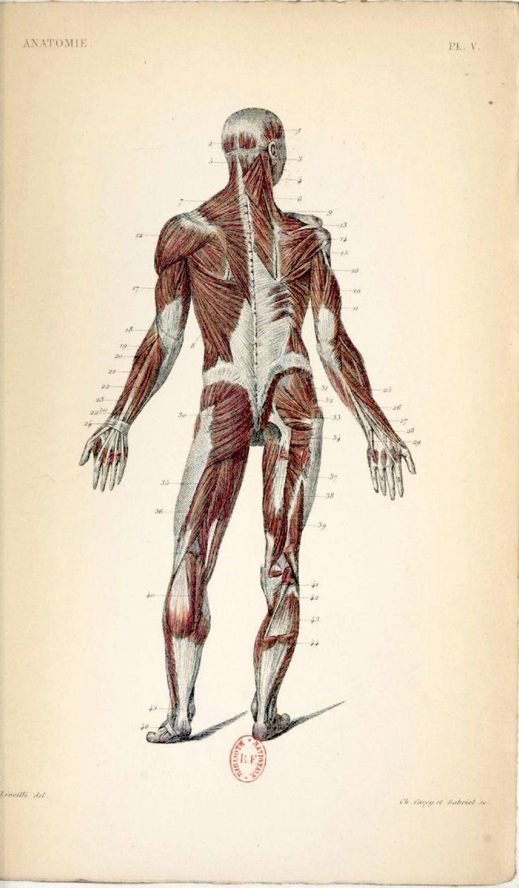 Les 112 meilleures images du tableau anatomie sur - Cabinet d anatomie et cytologie pathologiques ...