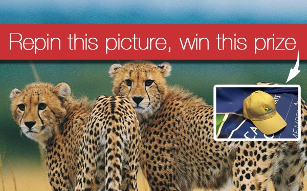 You'd look so smashing in this SAA hat. Follow pinterest.com/flysaa on Pinterest and repin this photo for a chance to win it! 10 repins are required to unlock this prize! More prizes here: http://pinterest.com/flysaa/repin-your-way-to-south-africa/ Official Rules: http://www.flysaa.com/cms/US/repinyourwaytosouthafrica.html. Enter by June 29.