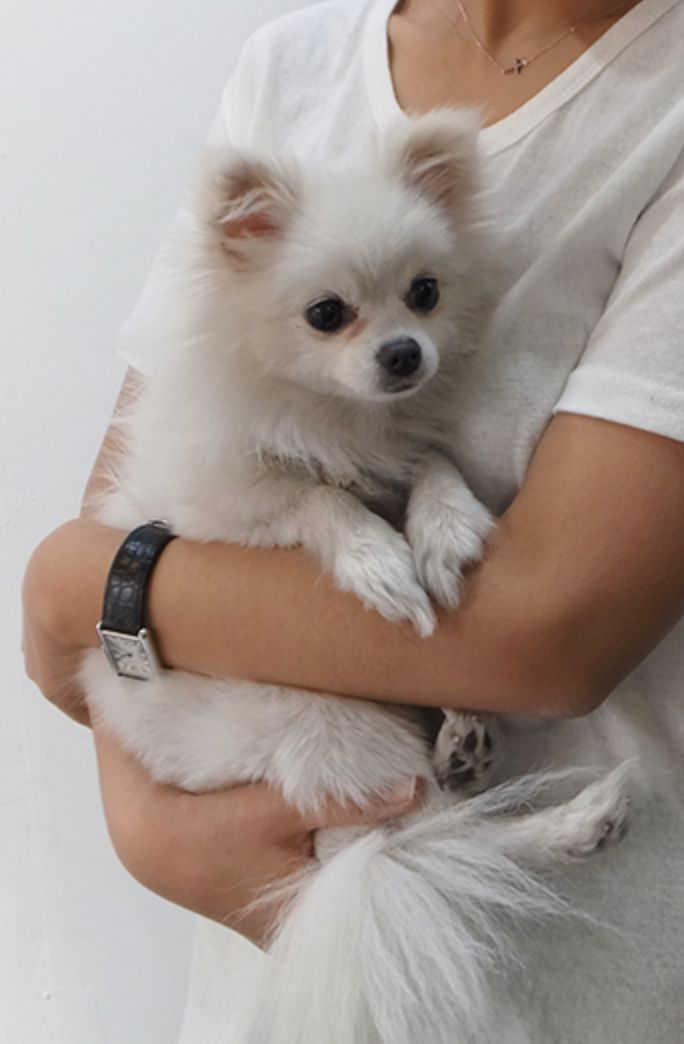 pomeranian faces best 25 pomeranians ideas on pinterest pomeranian puppy 4238