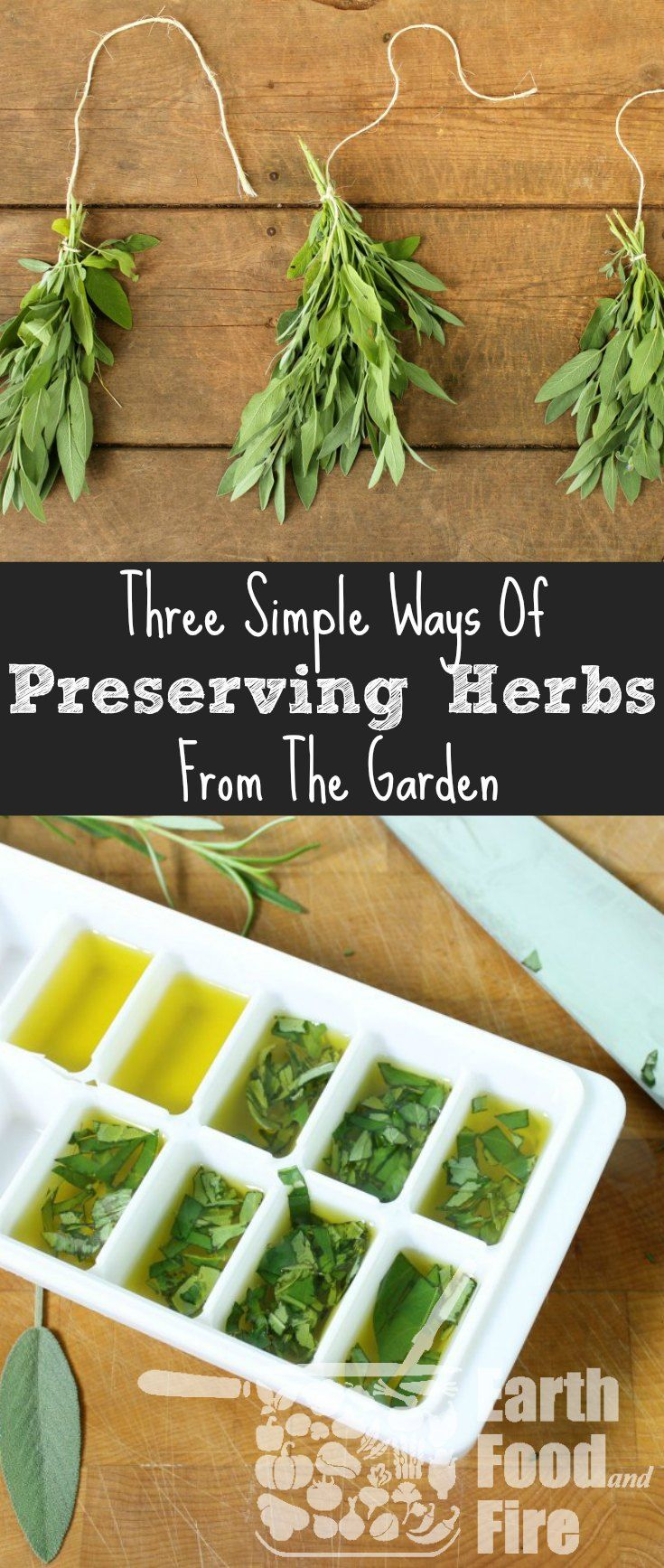 Preserving herbs is an easy way to save money, sto…