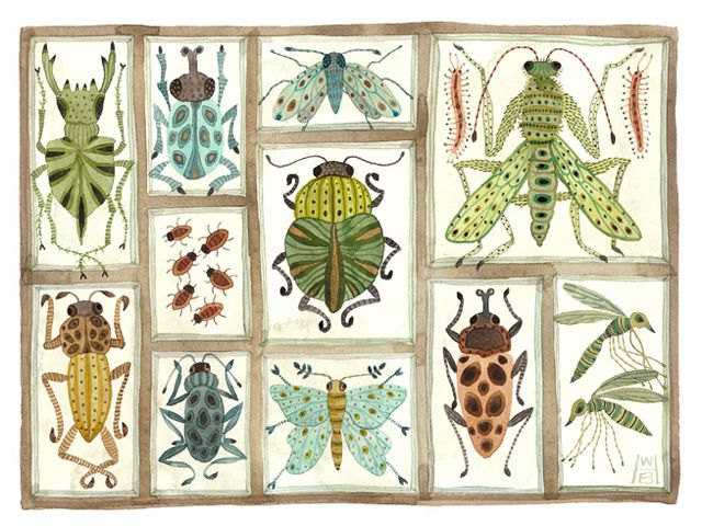 beetles weevils and flies no.10 by Golly Bard, via Flickr