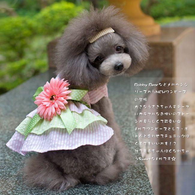 De-Princesa-pequena-margarida-vestido-pet-Pet-vestuário-Primavera-e-verão-rosa-XS-XL.jpg (650×652)
