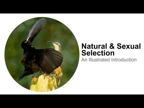 Natural and sexual selection