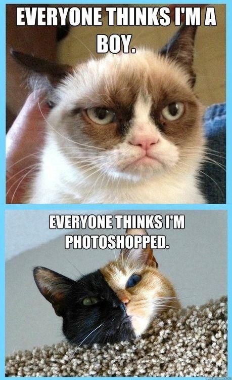 Grumpy Cat is actually a girl cat named Tarter Sauce