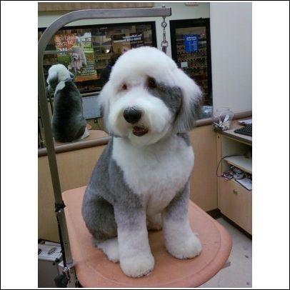Laura S Dog Grooming