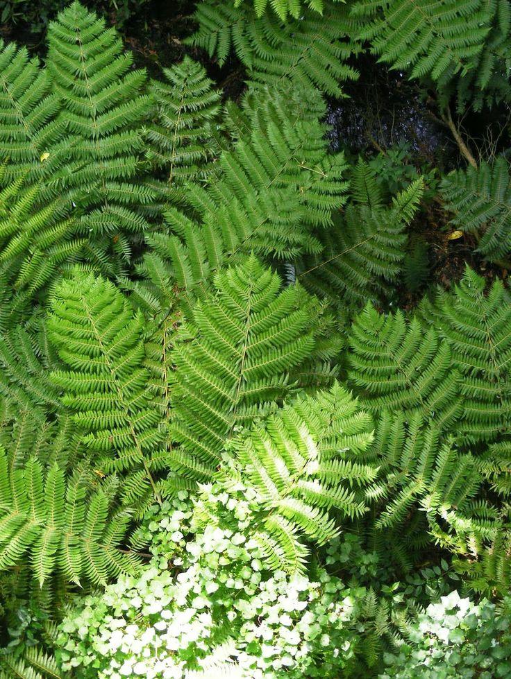 Otari-Wiltons Bush Native Botanic Gardens, Wellington, NZ
