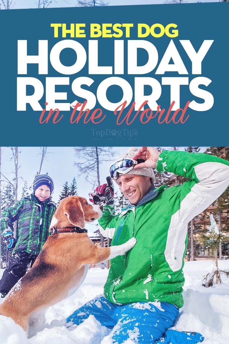 World's Best Dog-Friendly Holiday Resorts Tips and tricks to make traveling with your dog easier for both of you.