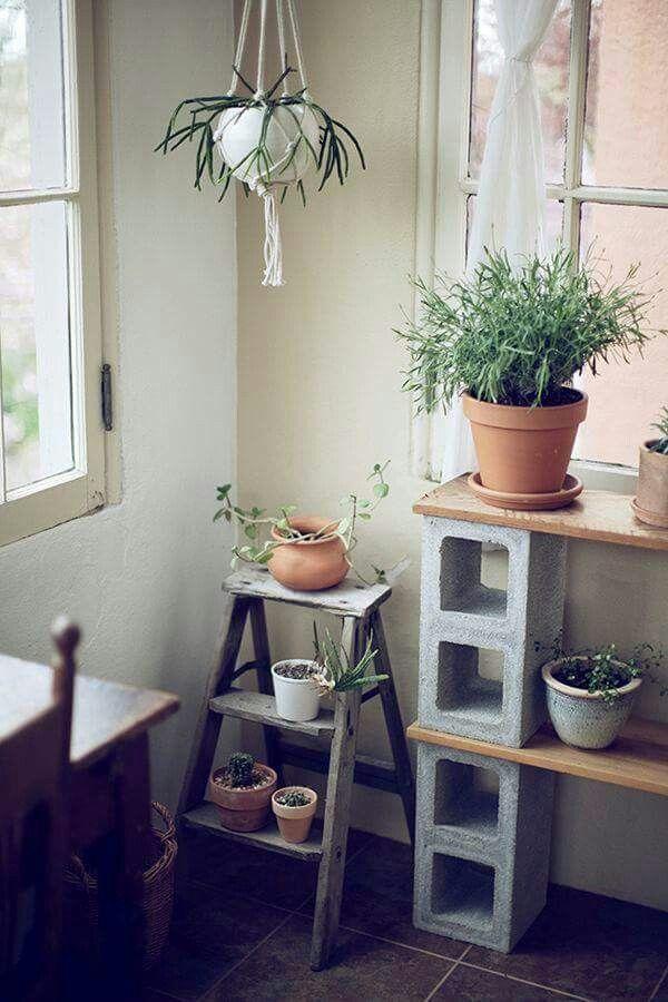 Organizador de plantas