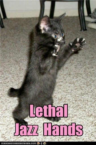 cutieFunny Pictures, Jazz Hands, Funny Stuff, Humor, Kittens, Funny Animal, Kitty, Lethal Jazz, Black Cat