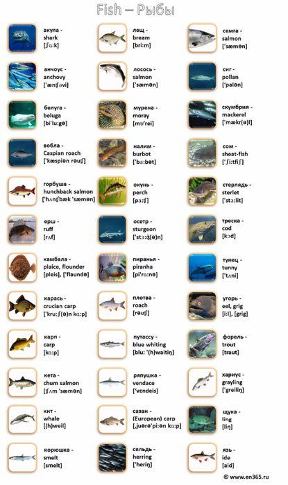рыбы (415x700, 252Kb)