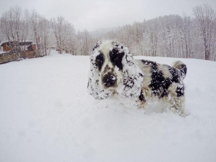 Olly and..snow snow snow