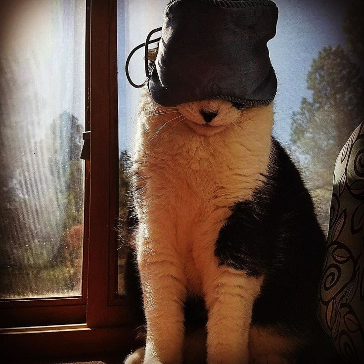 It's the weekend ! Just finishing my catnap then l'm outta here. #tgif #mookey #cat #cats #katt #katten #kattunge #gatto #gato #kot #kucingfluffy #neko  #party #thecatcornerstockholm #katze #partytime