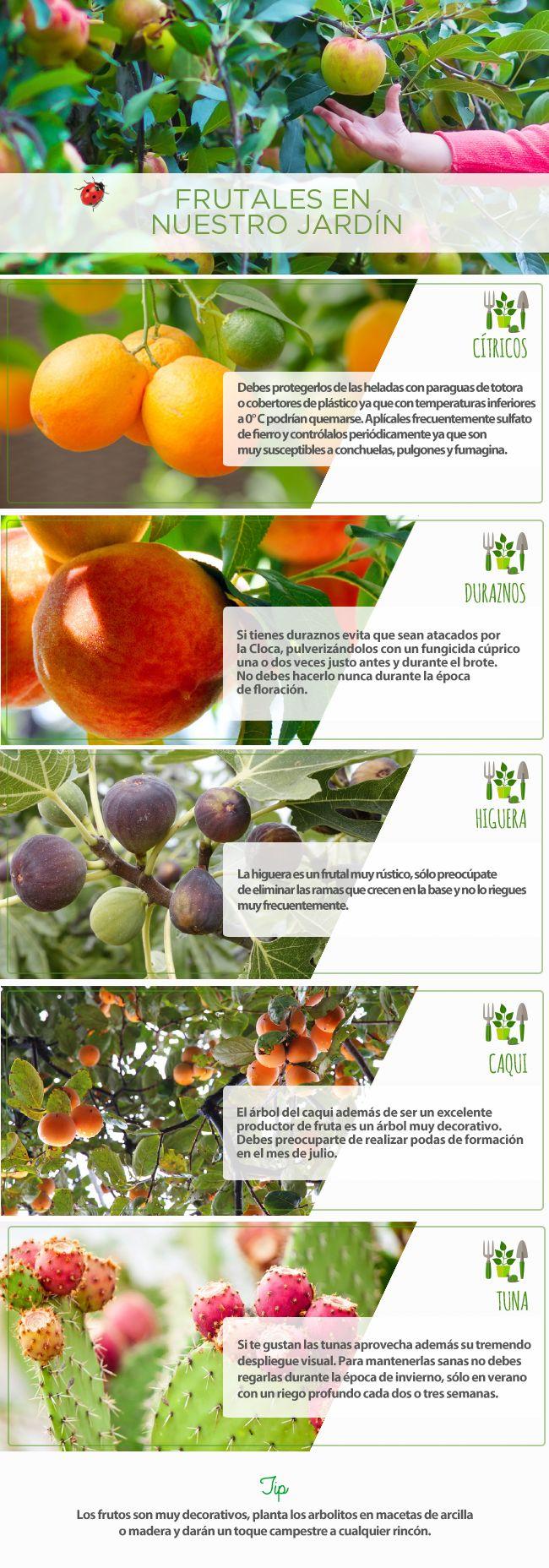 Frutales en nuestro jardín #jardín #PasoAPaso #frutas #cítricos