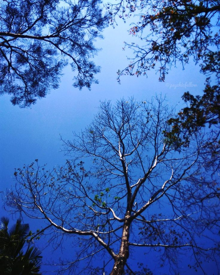 """"""" യതരയൽ പലപപഴ ഒനന ആകശതതകക നകകതതവരയ ആരണട? ആകശവ മരവ ഒകക കണമപൾ എനത ഒര കളർമയണ. """"  Sky _ Tree  . . . . . . . . . . . . . . . . . . . #travel #nature #tree #sky #nature_lovers #nature_brilliance #ff_nature #naturephotography #natureshots #outdoors #nature_good #ig_today #earthgallery #tree_magic #tree #colors #clouds #natureworld_photography #light #weather #landscape #ig_naturelovers #ig_nature #skylovers #dusk #weather #ig_worldclub #world_shotz #naturegram #mothernature"""