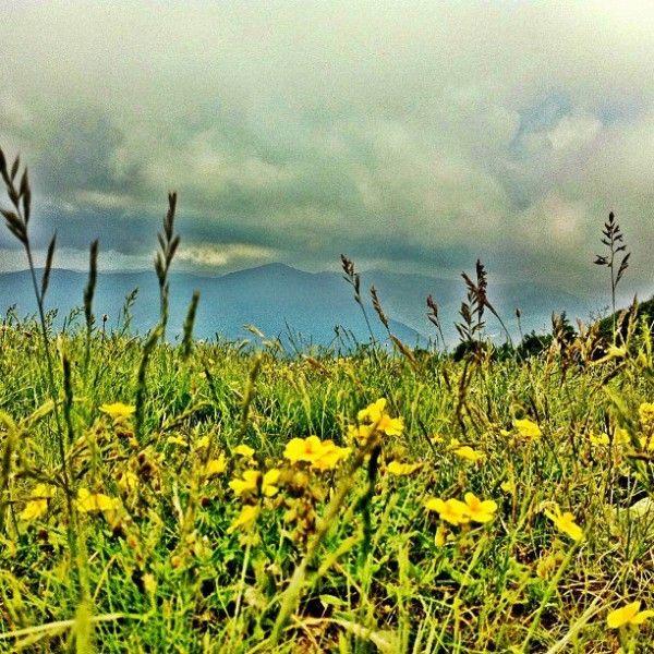 montseny natural park flowers