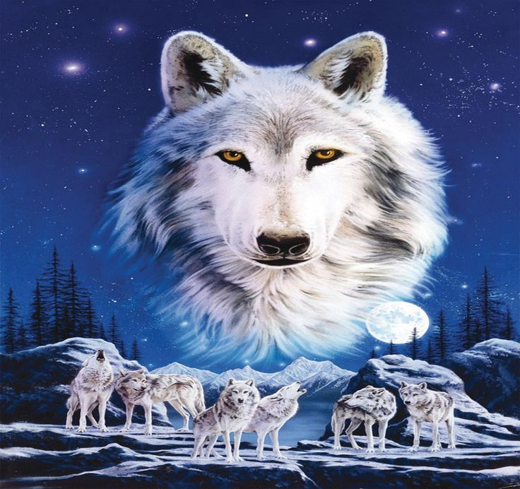 The Spirit Of Wolves Wallpaper Free Things I Like Wolf
