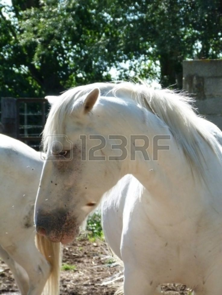 Horse in Camargue, France