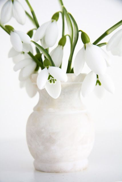 Galanthus (Snowdrop)    For such littleflowers, they have an amazingly strong fragrance. It's a fragrance very similar to that of gardenias.
