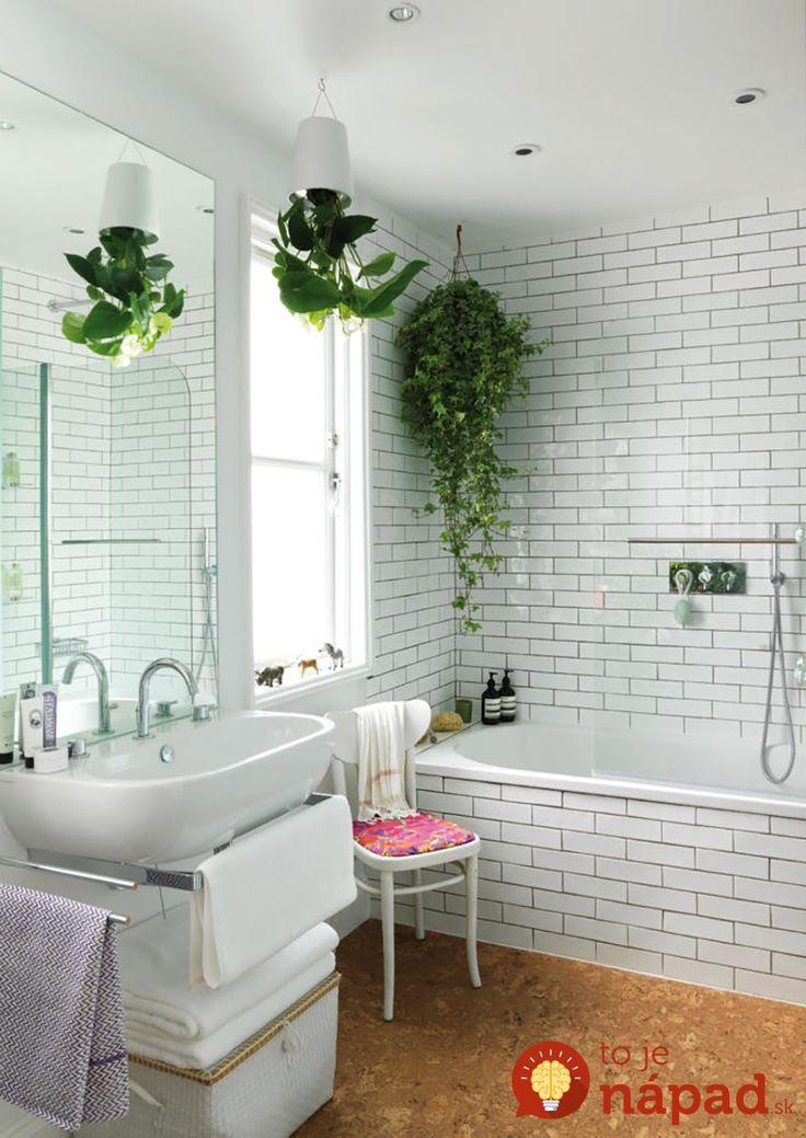 Rostliny do koupelny