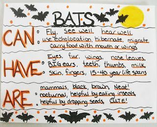All about Bats!