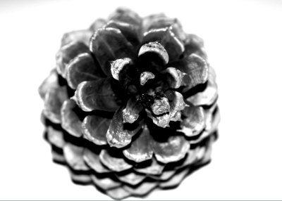 Pine Cone Black & White - Sally Fischer