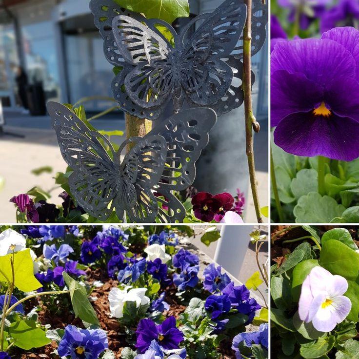 Igår planterade vi blommor ute hos olika  företag. Kul! 😀😀😀#lillahults @lillahultsblommor