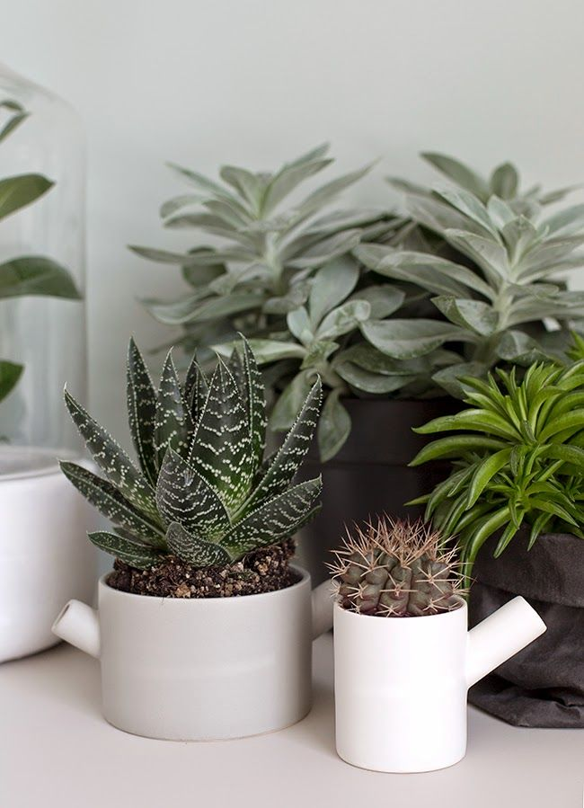 Indoor Plants | Fresh Ideas