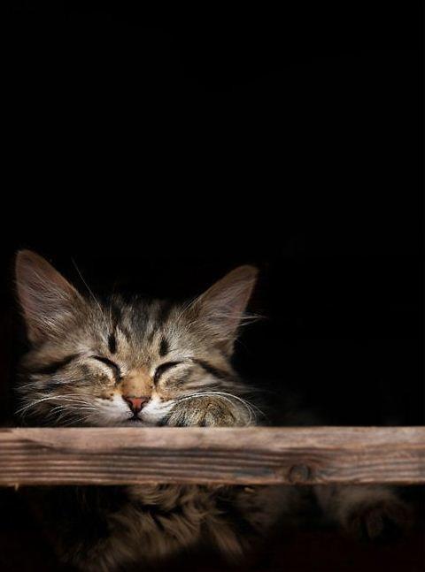 how to make a cat fall asleep