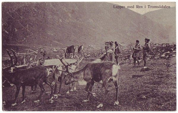 Stedskort: Lapper med Ren i Tromsödalen