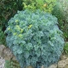 Plus de 1000 id es propos de jardin sur pinterest for Recherche plante