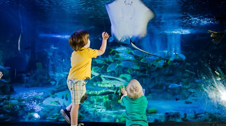 Children admiring the spectacular fishes in the National Sea Life Centre Birmingham