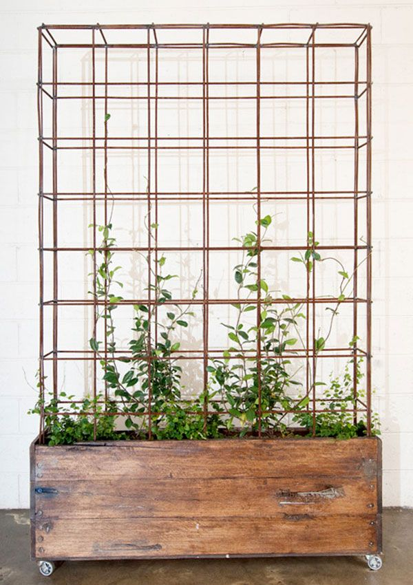 Great option for a moveable indoor growing space for self pollinating plants.