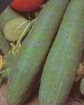 Muncher Burpless Cucumber - 150 Seeds - BONUS PACK!
