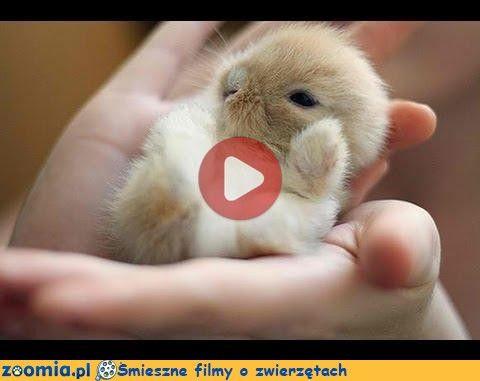 Śpioszek « Inne zwierzęta « Śmieszne filmy o zwierzętach - śmieszne koty, śmieszne psy. Zoomia.pl :: Zoomia pl