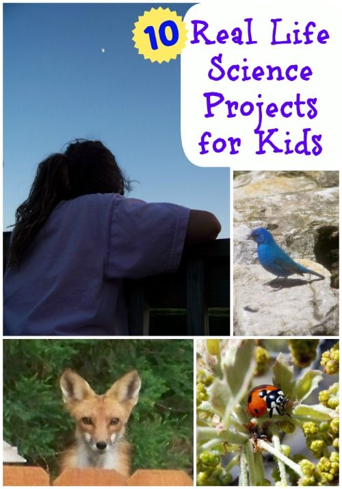 Amazing ways that kids get involved in hands-on science and data collection! #stem