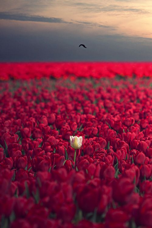 """""""It takes nothing to join the crowd. It takes everything to stand alone."""""""